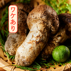 【お得】憧れの国産松茸をおうちで!/南信州産松茸(ワケあり品・フレッシュ)